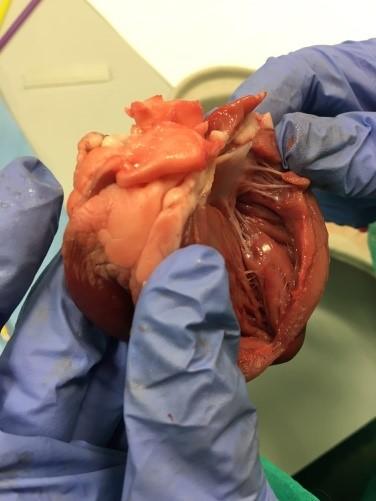 fig 8 corazón.png.jpg.png